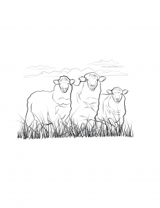 My Sheep Listen-04